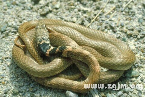 庄闲游戏黄蛇