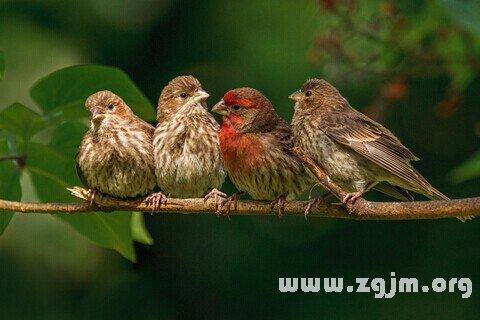 梦见一群大鸟落到树上