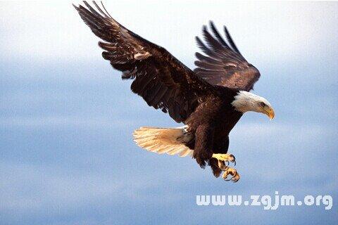 梦见老鹰向我飞来啄我头
