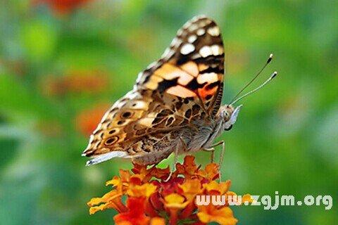 庄闲游戏蝴蝶
