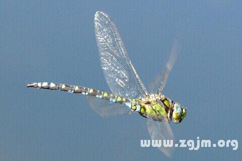 庄闲游戏蜻蜓