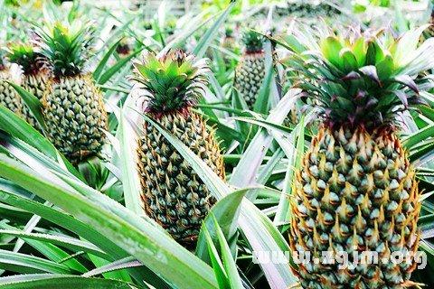 庄闲游戏菠萝