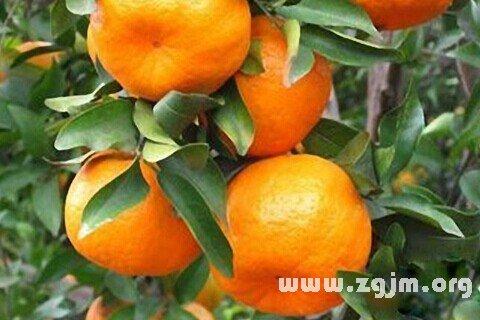 庄闲游戏橘子