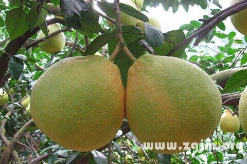 庄闲游戏柚子
