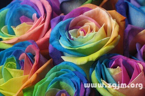 梦见花朵 鲜花