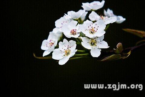 庄闲游戏梨花