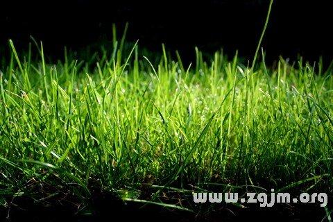 庄闲游戏草丛