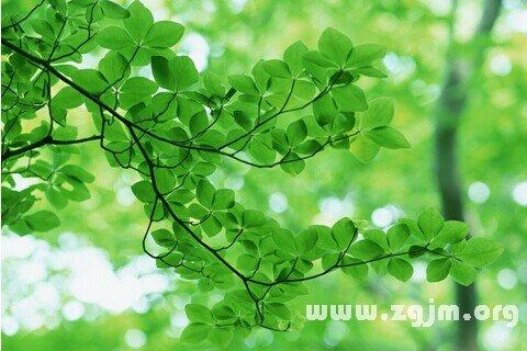 庄闲游戏树叶