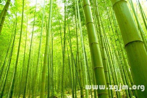 庄闲游戏竹林