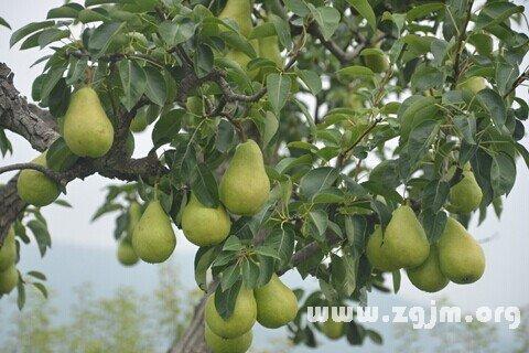 庄闲游戏梨树