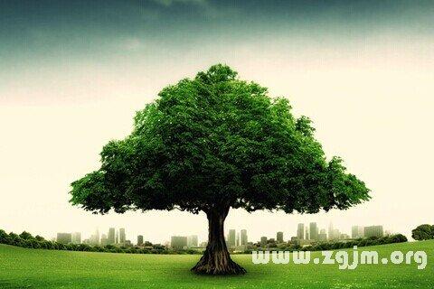 庄闲游戏大树