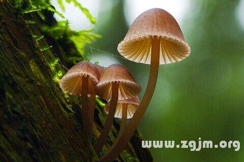 庄闲游戏蘑菇