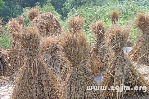 庄闲游戏稻草