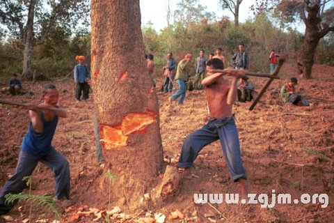庄闲游戏砍树