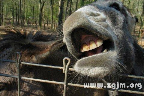梦见驴咬人