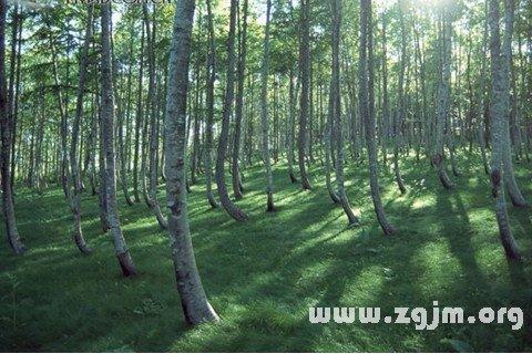 梦见在森林中徘徊