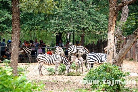梦见动物园