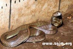 女人梦见很多蛇