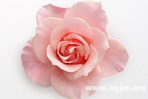 梦见粉红色
