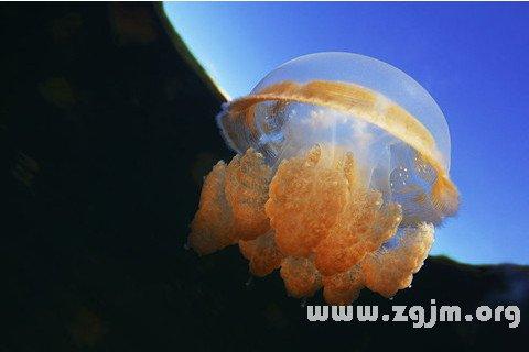 zgjm.org   梦见被海蜇咬了一口,表示你外出旅行中可能会有财运.