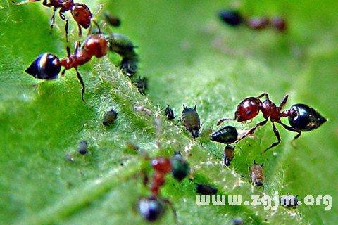 梦见食物上有蚂蚁