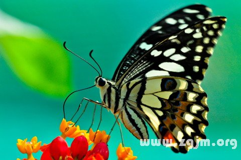 梦见追捕蝴蝶