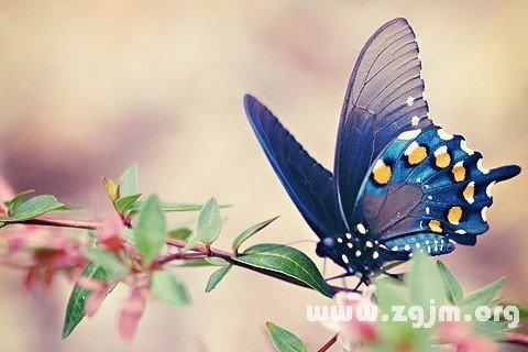 梦见蝴蝶落在头上