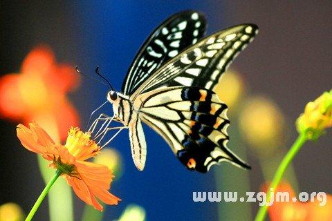梦见蝴蝶在花丛里飞舞