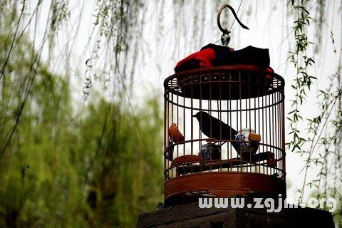 庄闲游戏笼中之鸟