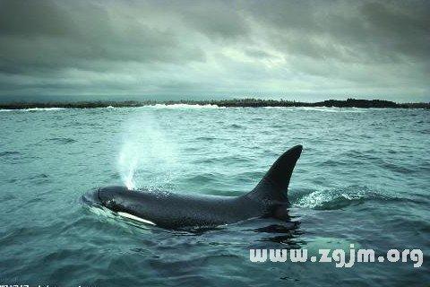 梦见鲸鱼喷水