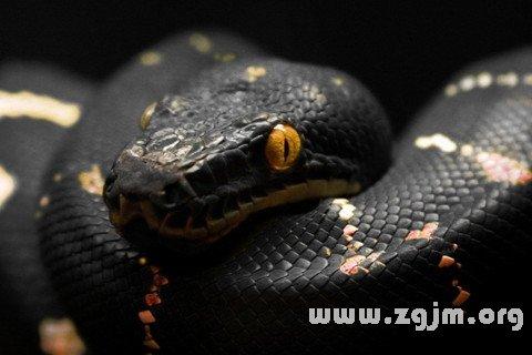 梦见黑色大蟒蛇