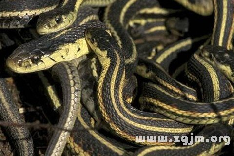 梦见彩色的蛇_周公解梦梦到彩色的蛇是什么意思_做梦