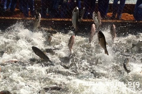 梦见鱼从水里跳出来