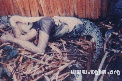 梦见蛇杀死人
