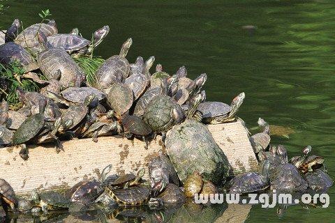 梦见乌龟晒太阳