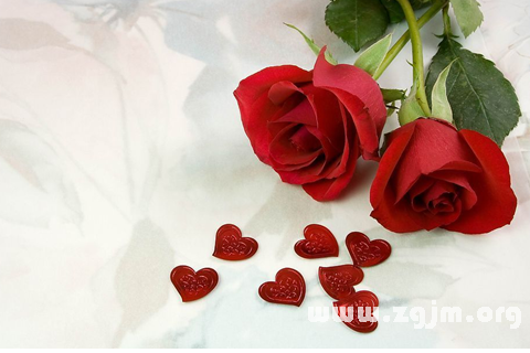 梦见红玫瑰