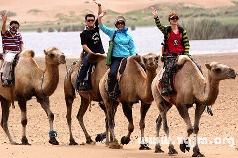 梦见骑骆驼