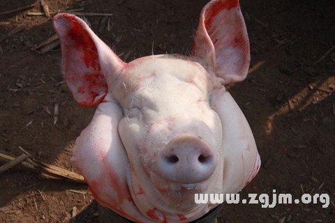 孕妇梦见别人卖猪头
