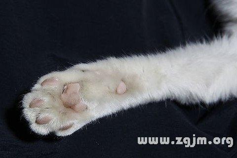 梦见动物的爪子