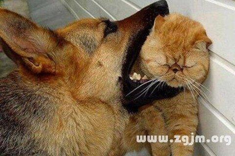 梦见狗咬死猫