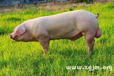 梦见公猪英式早餐黄豆图片