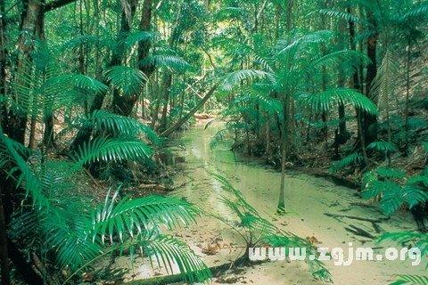 梦见热带雨林