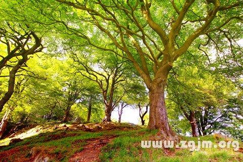 梦见各种树木