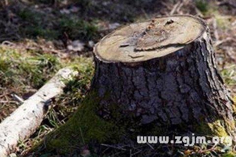 梦见上山砍死树桩