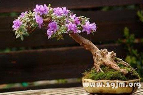 梦见树木开花结果,预示梦者事业将蒸蒸日上