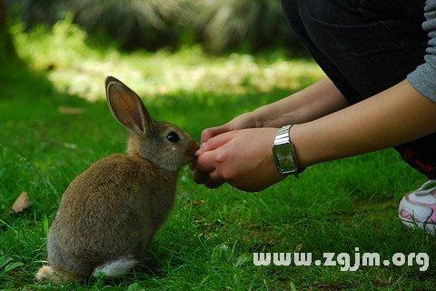 梦见带兔子来到自己身边