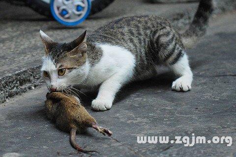 梦见抓老鼠