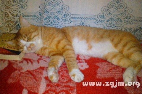 梦见猫死了_周公解梦梦到猫死了是什么意思_做梦梦见