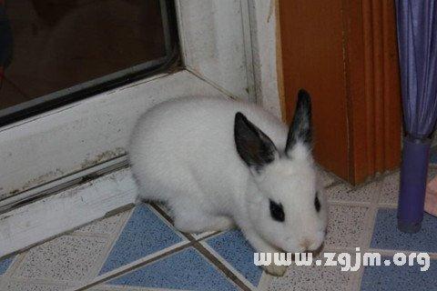 梦见兔子跑进屋