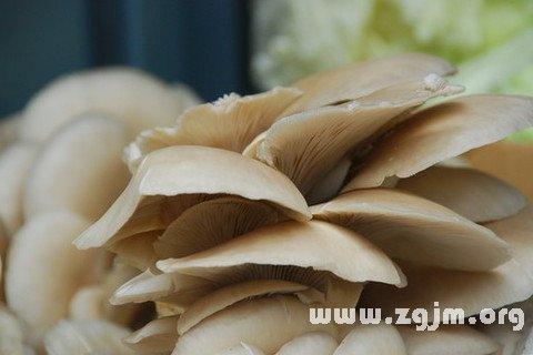梦见买蘑菇